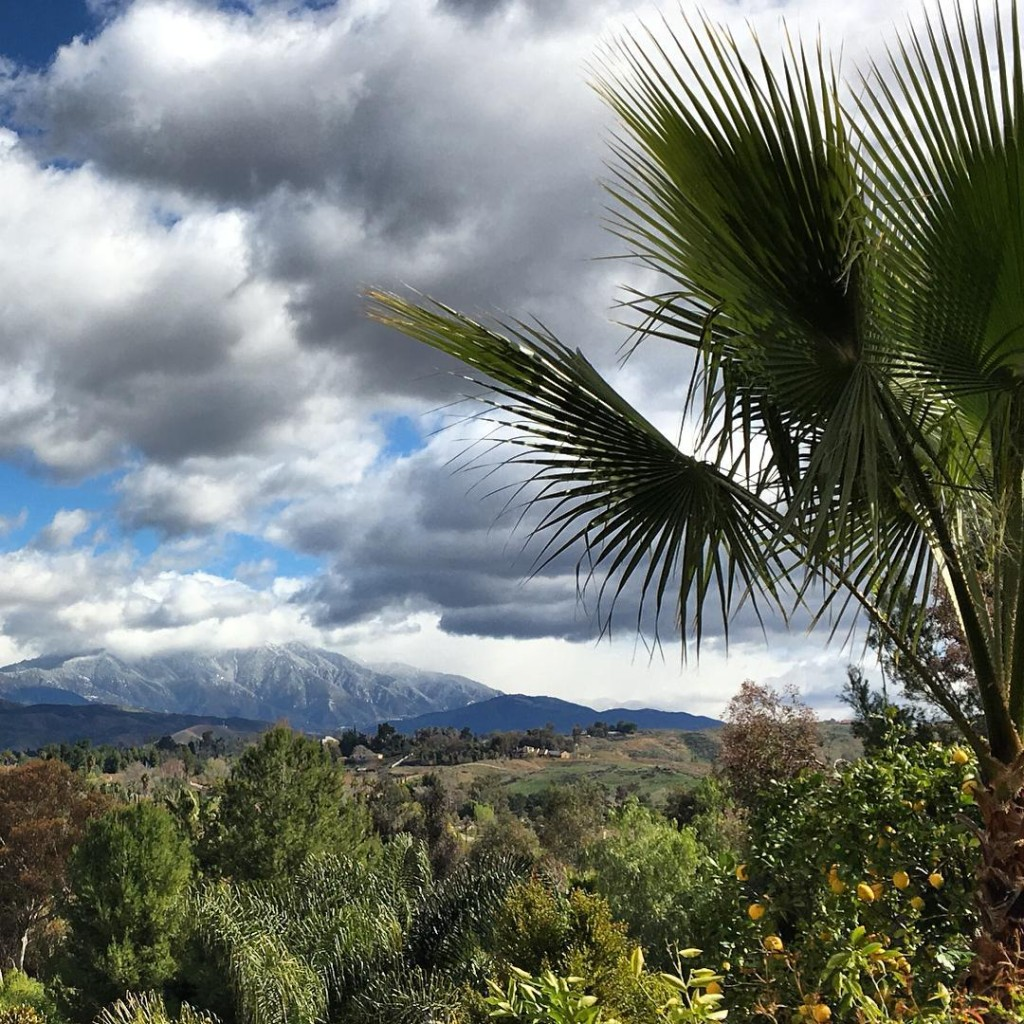Palm trees and snow capped mountains welcome to Southern Californiahellip
